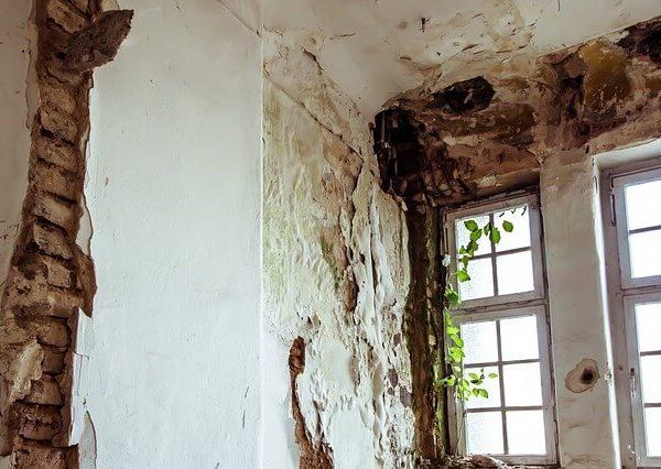 Jak pozbyć się grzyba na ścianie